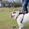 Как можно управлять своей собакой