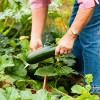 Что вырастить огородному новичку