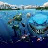 Как акулы любовью занимаются