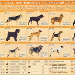 Собаки для службы