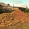Минимальные затраты для выращивания картофеля на 1 сотке земли