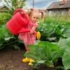 Как получить вкусный и красивый урожай капусты