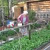 Какие сорта зелени дадут быстрый урожай