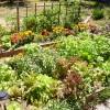 Что посадить полезного на даче, не требующего особого ухода