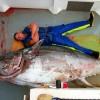 Как ловят тунец