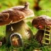 Разумные грибы — хозяева природы