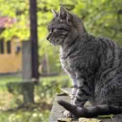 Кошка умничка